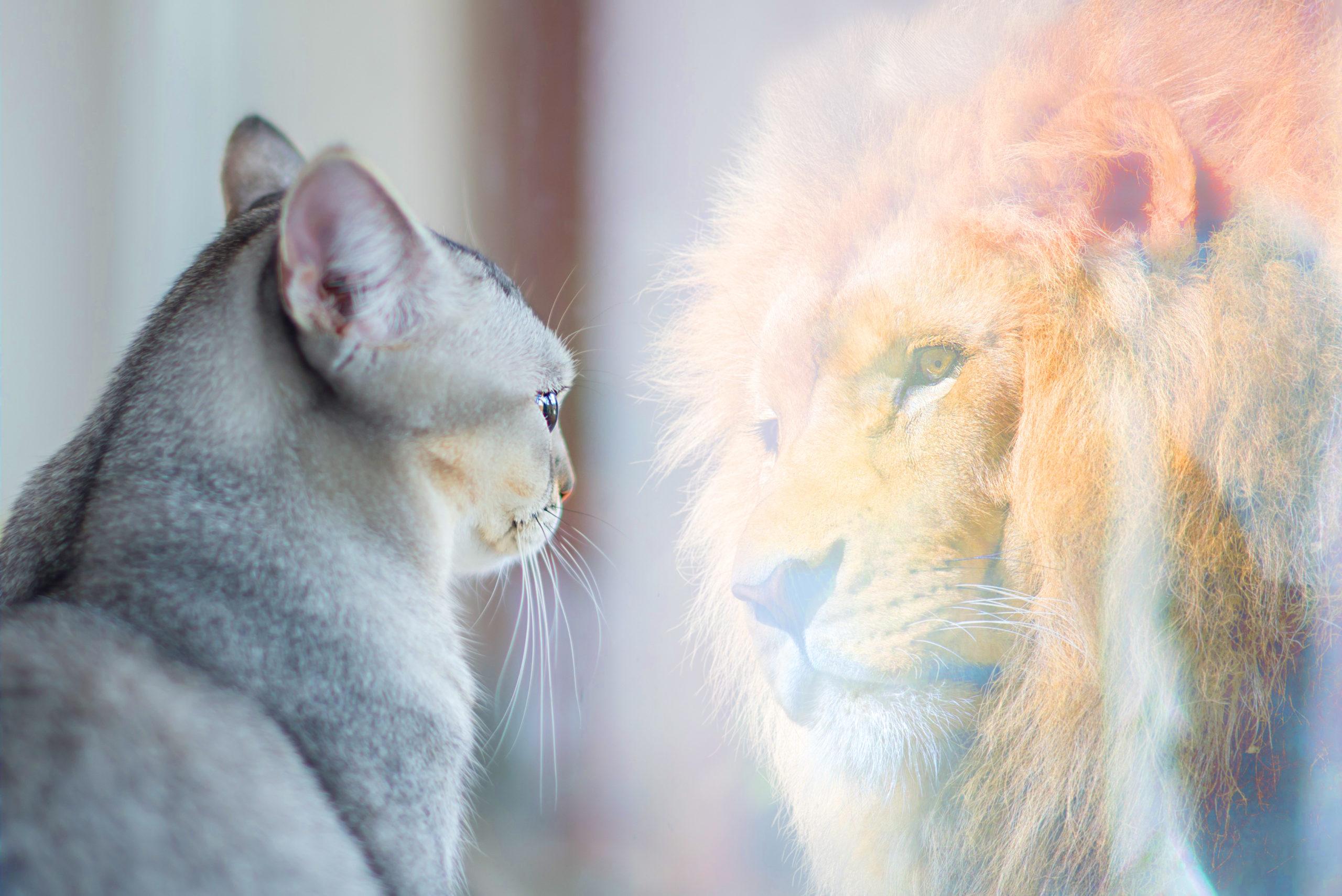 Das dynamische Selbstbild oder warum jeder Mensch sich zum Positiven verändern kann
